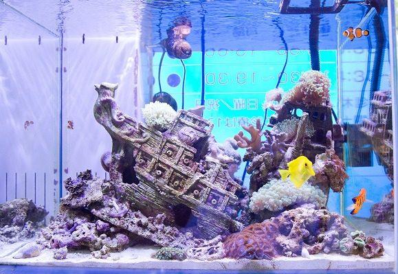 水槽内には海水魚がいっぱい!
